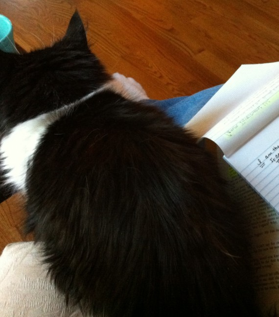 Cat Sits on my Book and Notepad