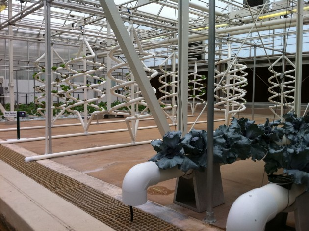 Growing Lettuce and Other Plants at the Living with the Land greenhouse at Walt Disney World's Epcot