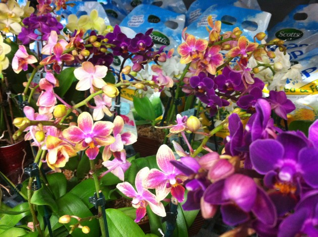 Orchids for Balcony