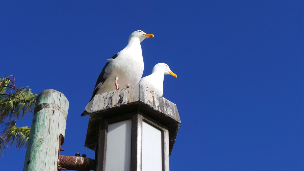 Birds Having Conversation Up Close Laguna Beach California
