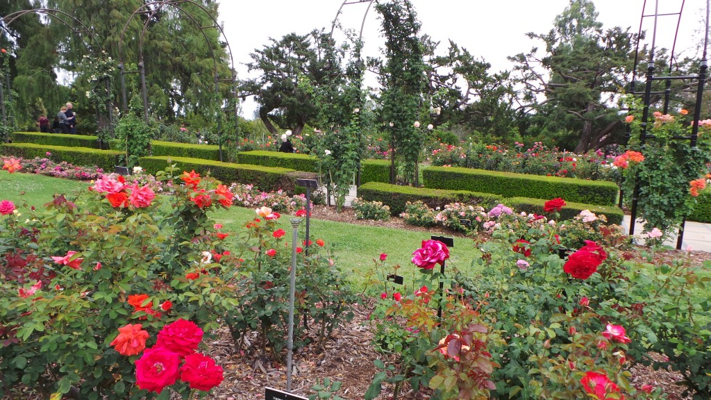 More Rose Gardens Huntington Pasadena
