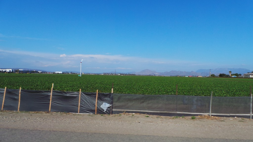 Strawberry Fields Surrounded By Mountains in Oxnard California