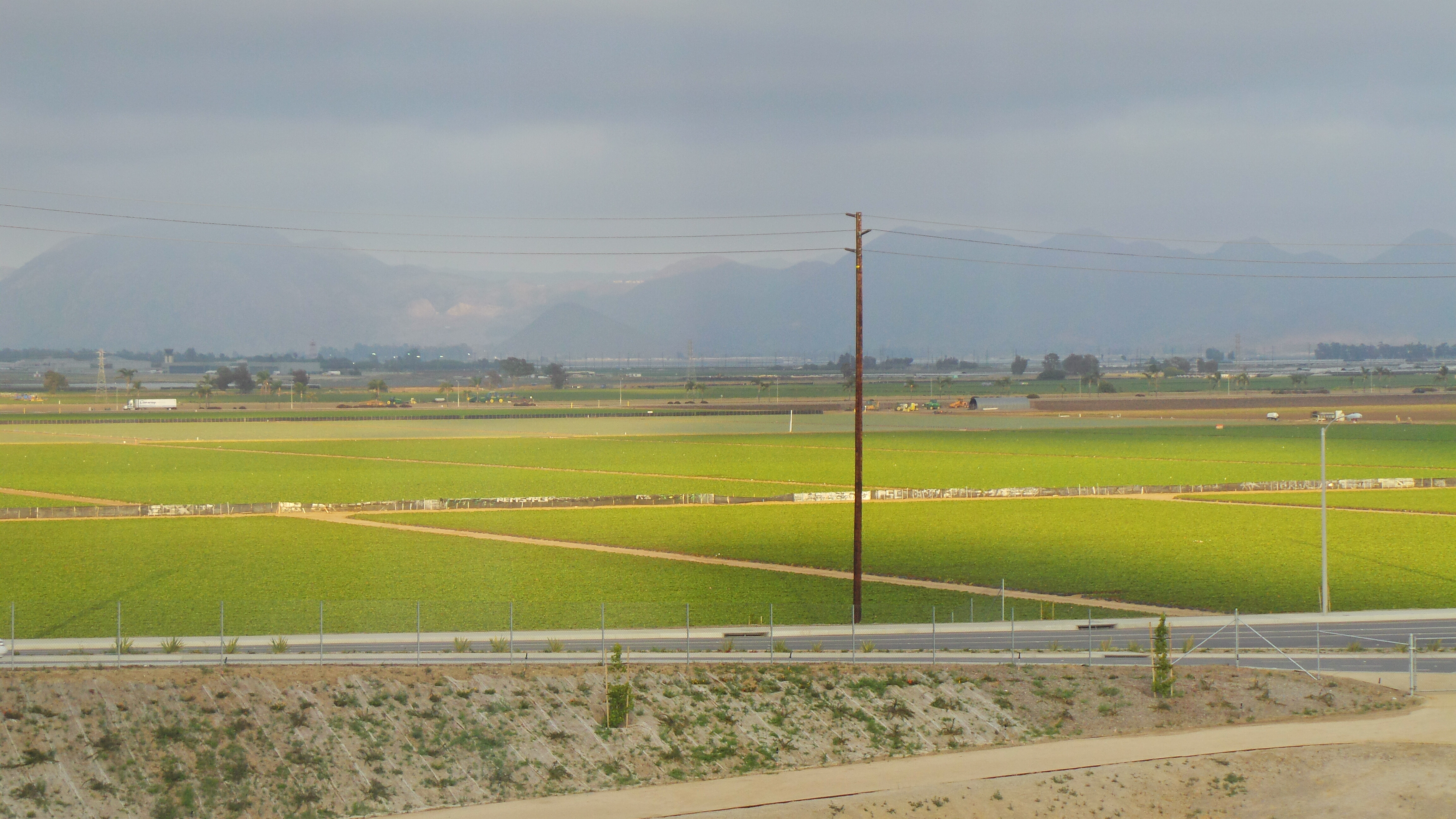 Strawberry Fields in Oxnard California from Hilton Garden Inn Window