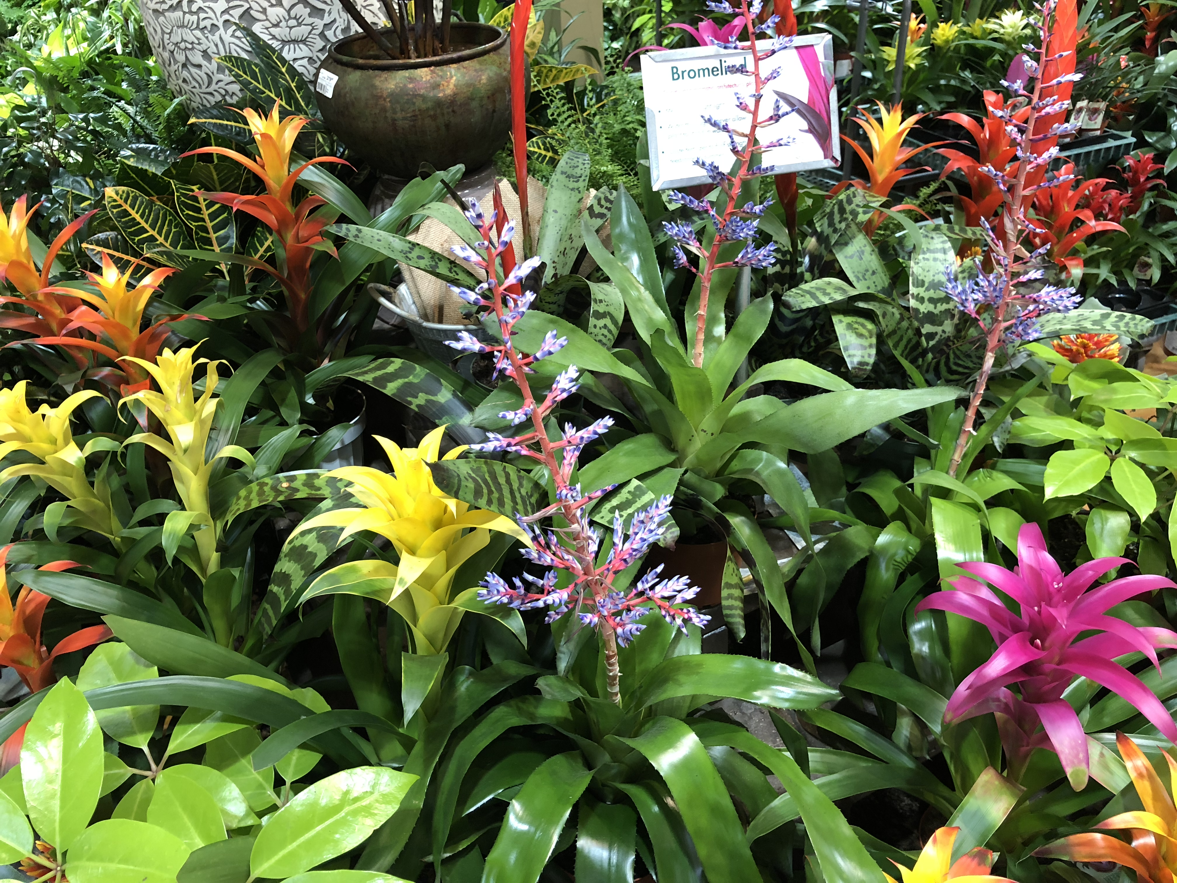 Armstrong's Garden Centers Newport Beach More Crazy Flowers
