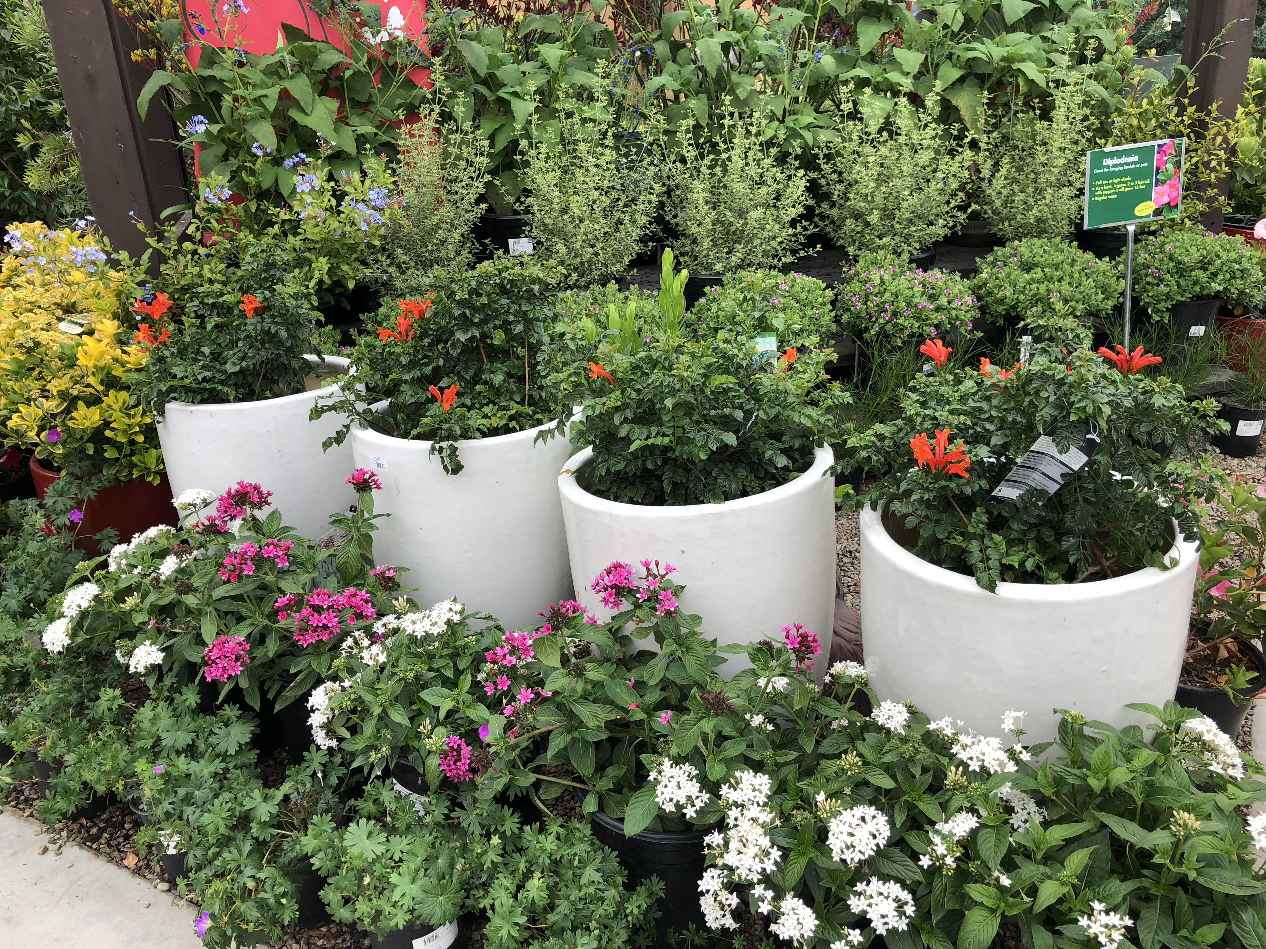 Armstrong's Garden Centers Newport Beach Potted Flowers and Shrubs