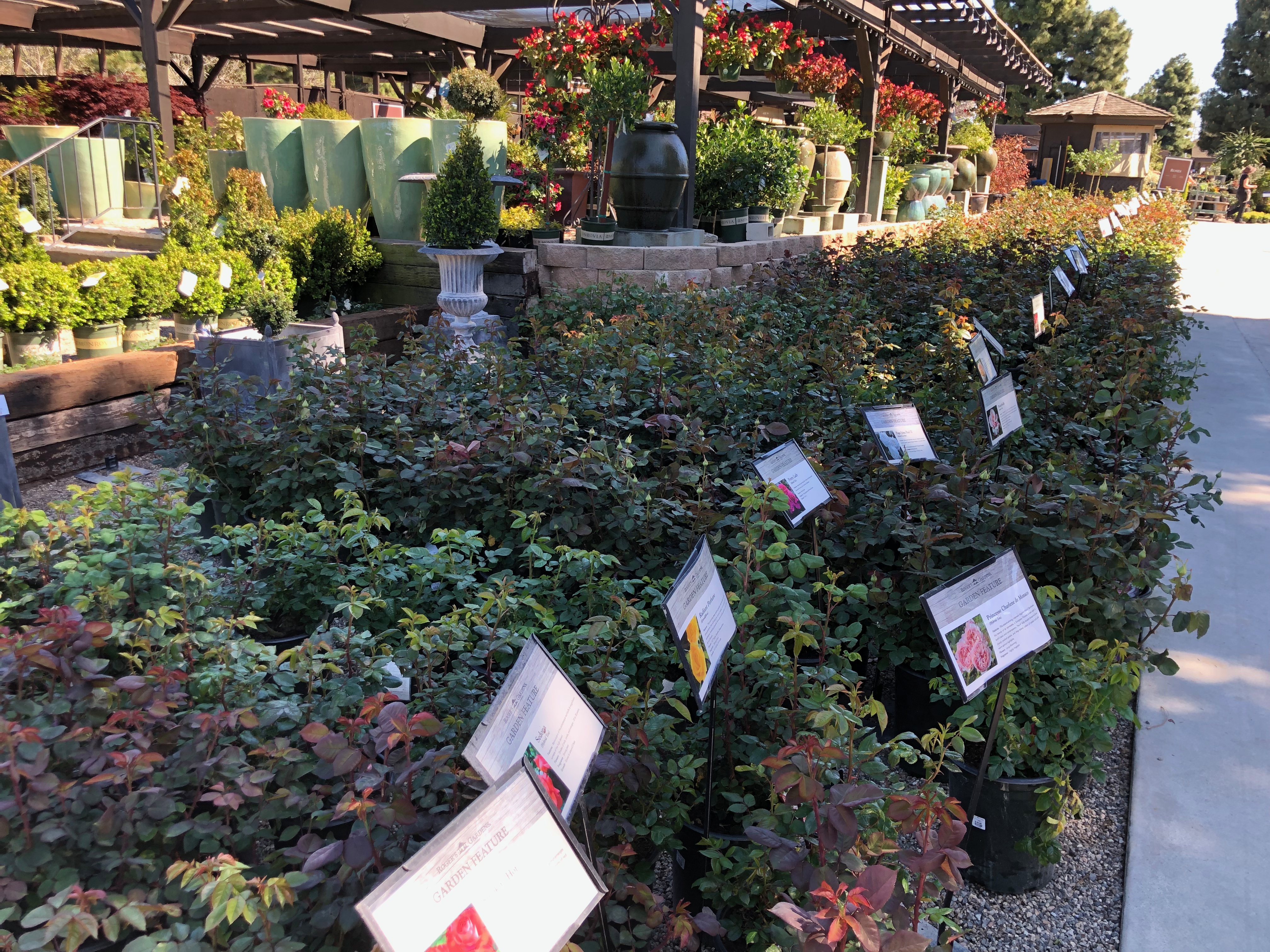 Some of the Rose Plants at Roger's Gardens